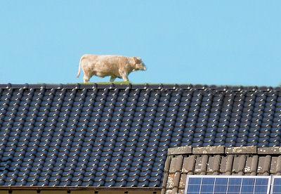 Wie kommt der Kuhmist aufs Dach ?